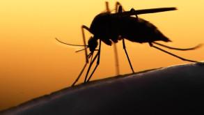 İstanbul'da 4 kişide 'Batı Nil Virüsü' tespit edildi