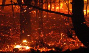 Orman yangınını sağanak yağmur söndürdü