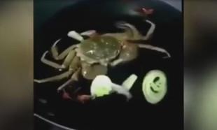 Canlı canlı tavaya atılan yengeç etrafındaki sebzeleri yiyor