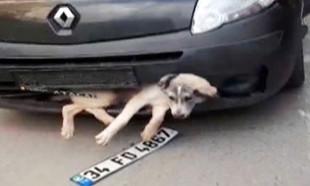 Tampona sıkışan köpek ile kilometrelerce yol gitti