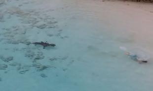 Suya giren çocuğa saldırmak için başına köpek balıkları üşüştü