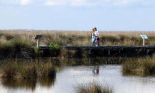 Kızılırmak Deltası Kuş Cenneti'ne girişlere sınırlama