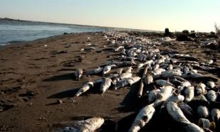 Balık ölümlerine önlem için akarsu ve göllere oksijen pompalanacak