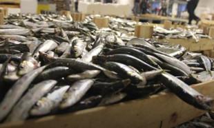Taze balık mı dondurulmuş balık mı daha sağlıklı?