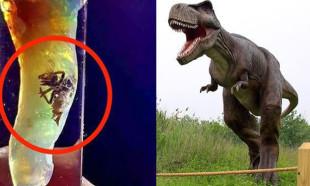 Dünyayı şoke eden keşif! Dinozorlar geri mi dönüyor?