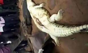 Kayıp çocuk timsahın karnından çıktı!