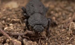 Şeytani zırhlı böceği arabayla ezdiler!