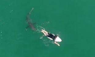 Drone görüntülerini izleyince şoke oldu! Köpekbalığı...