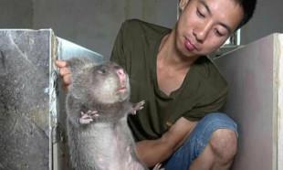 Çin'den en çok tüketilen vahşi hayvana yasak geldi