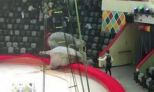 Rusya'da sirkte filler birbirine girdi: İzleyenler böyle kaçtı