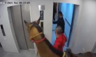 İsrail'de asansöre at bindirmeye çalışan 2 kişiye gözaltı