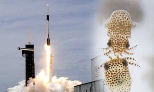 SpaceX ve NASA'nın mürekkep balıkları taşıyan roketi fırlatıldı!