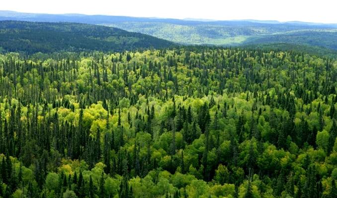 Orman alanları için yeni düzenleme! haberi - FinansGündem.com