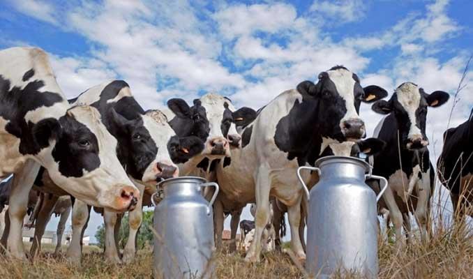 Çiğ süt üreticilerine 367 milyon lira ödenecek