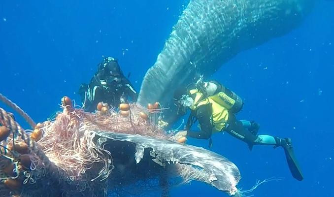 Derinde dev balinayı kurtarma operasyonu