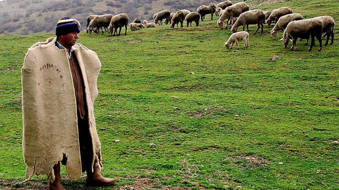 Kayseri'de 4 bin lira aylık ücretle çoban bulunamıyor