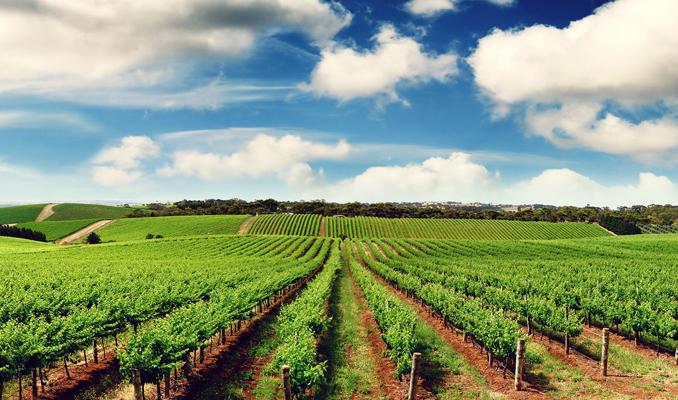 Tarım ihracatı 107 milyar doları aştı