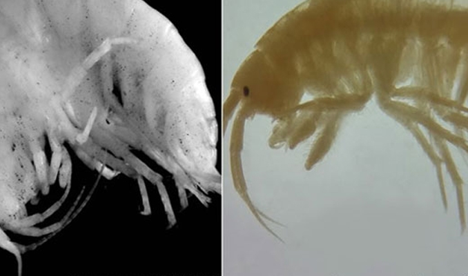 Türk bilim insanları 2 yeni canlı türü tespit etti