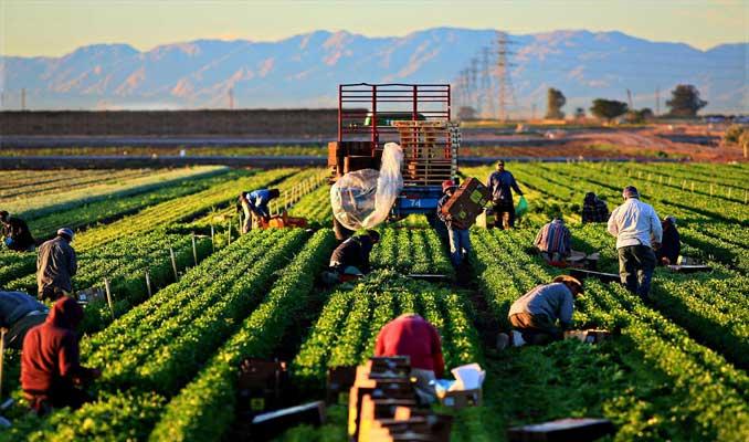 Tarım Bakanlığı, 200 milyon TL hibe sağlanacak 182 projeyi onayladı