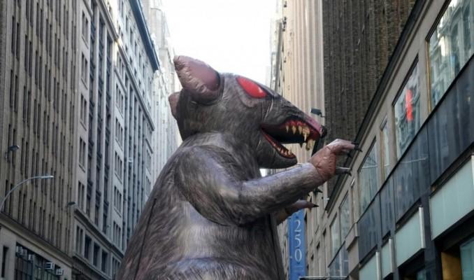 İnşaat şirketinin önüne dev sıçanlar konuldu