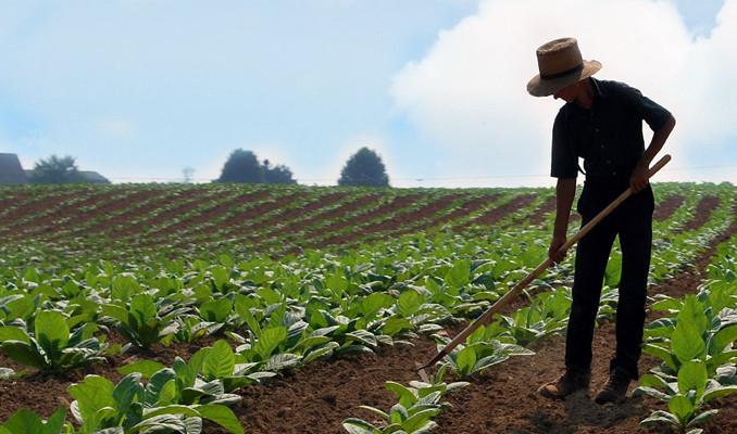 ABD'li çiftçiler iflas ediyor