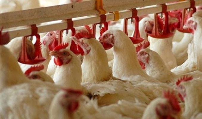 Beyaz et şirketlerine ceza yağdı