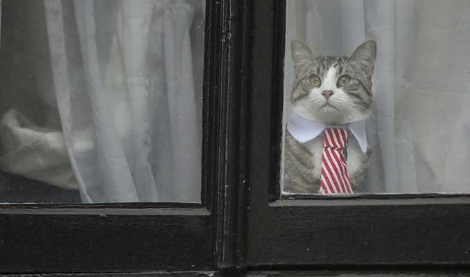 Assange'dan sonra bu kez kedi James 'casuslukla' suçlandı
