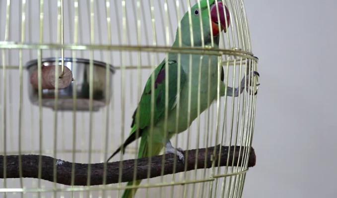 Uyuşturucu baskınında 'papağana' gözaltı!
