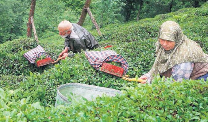 Bakan Pakdemirli: Yaş çay fiyatı destekleme ile 3,03 TL