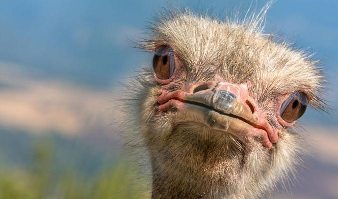 8.5 milyon yıllık deve kuşu yumurtası bulundu