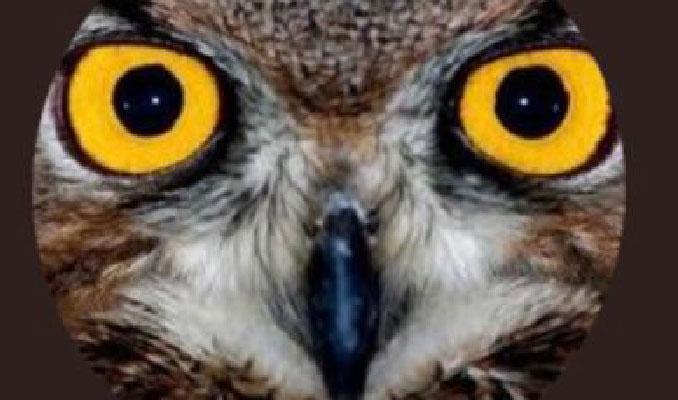 Twitter fenomeni Ankara Kuşu FETÖ'den gözaltında