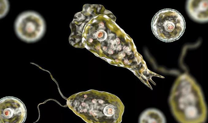 ABD'de içme suyunda beyin yiyen amip tespit edildi