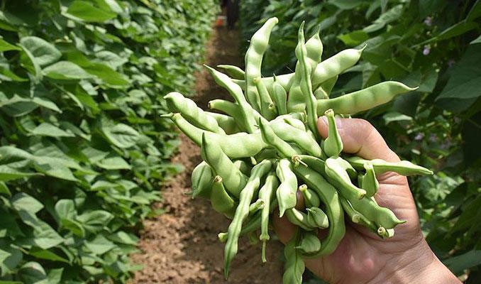 İTO açıkladı: İşte el yakan sebzeler !