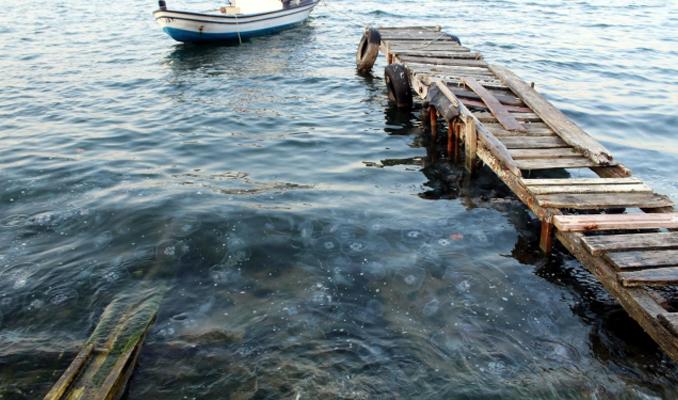 Gölcük sahilinde denizanası istilası