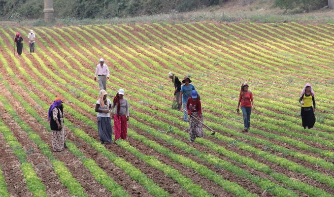 Bakanlığın sağladığı desteklerle organik üretim ve tüketim artırıyor