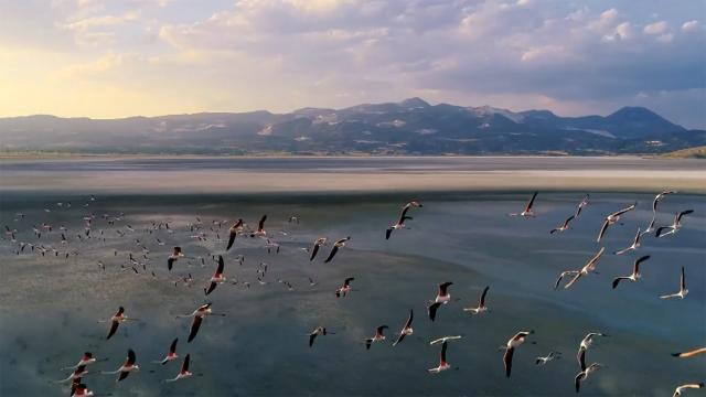 Flamingo ölümlerinin nedeni belli oldu
