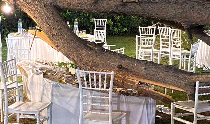 Düğünde ağaç devrildi: Çok sayıda yaralı var