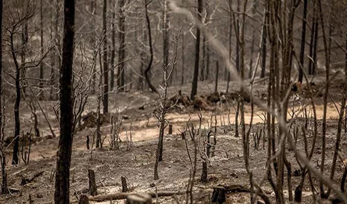 Orman Genel Müdürlüğü son durumu açıkladı!