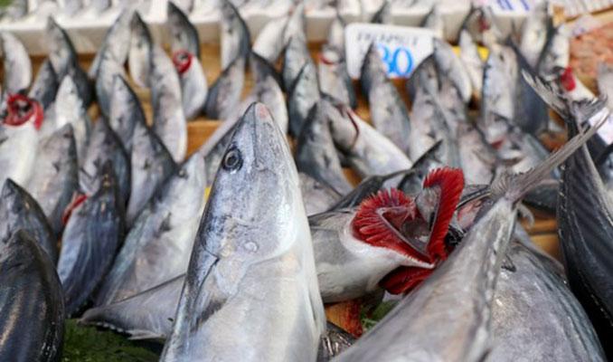 Uzmanlar uyarmaya başladı: Esmer etli balıklara dikkat