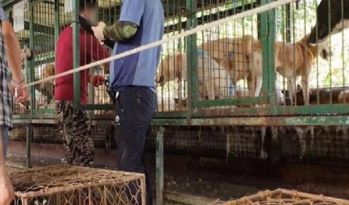 Güney Kore, köpek eti tüketimini yasaklıyor