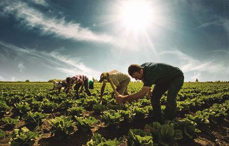 Şekerbank'tan çiftçiye 60 ay vade